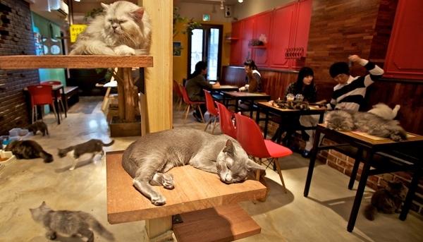 12 необычных кафе