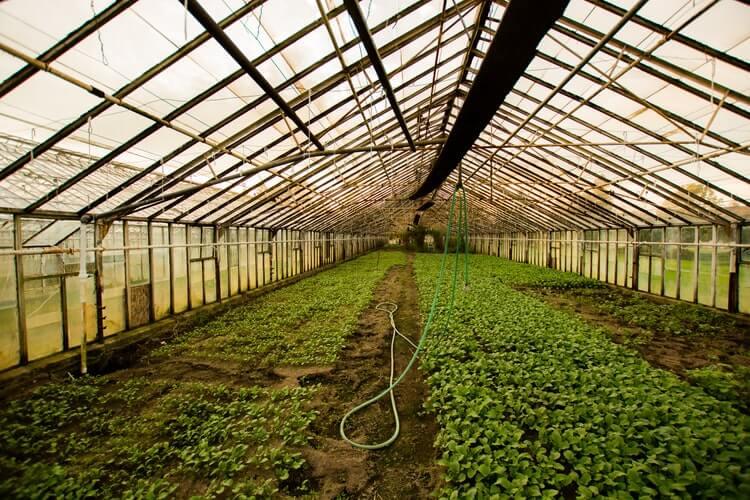 Что можно выращивать для бизнеса в домашних условиях?
