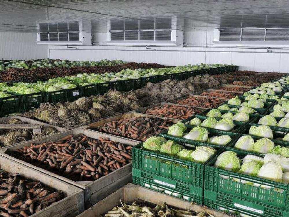 хранение капусты, моркови, картофеля