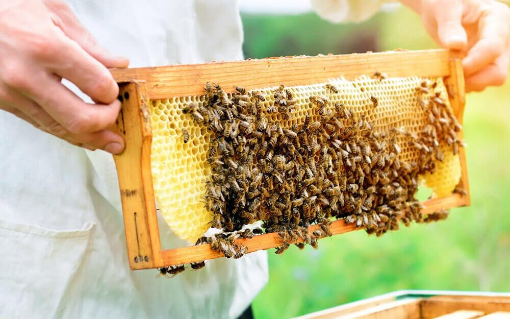Разведения пчел