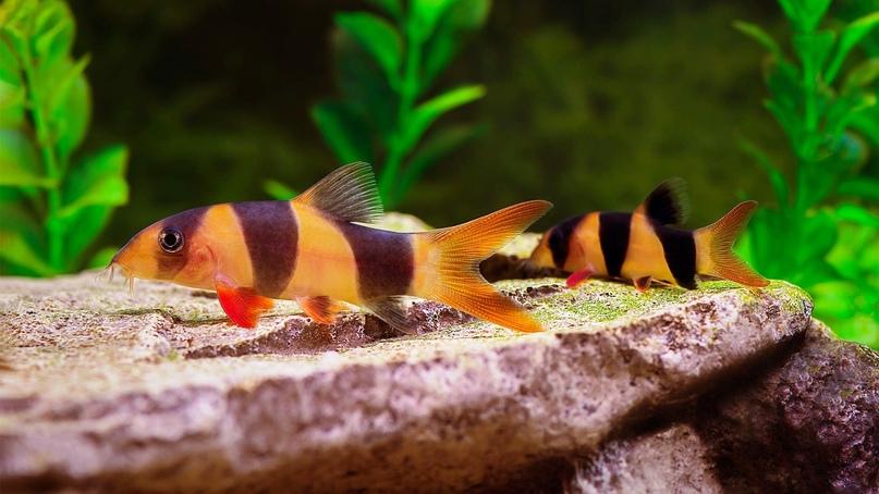 Бизнес на аквариумных рыбках и растениях