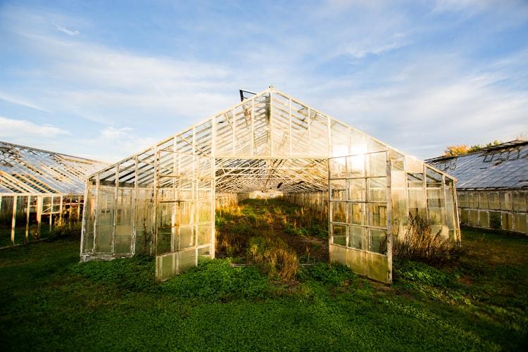 Бизнес-план тепличного хозяйства по выращиванию зелени