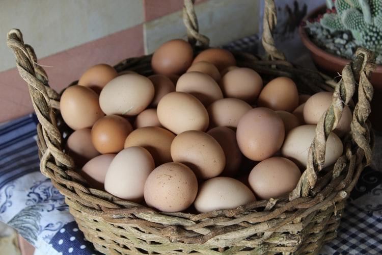 Выращивание кур на яйцо