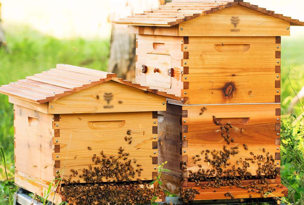 Приобретаем ульи и пчел