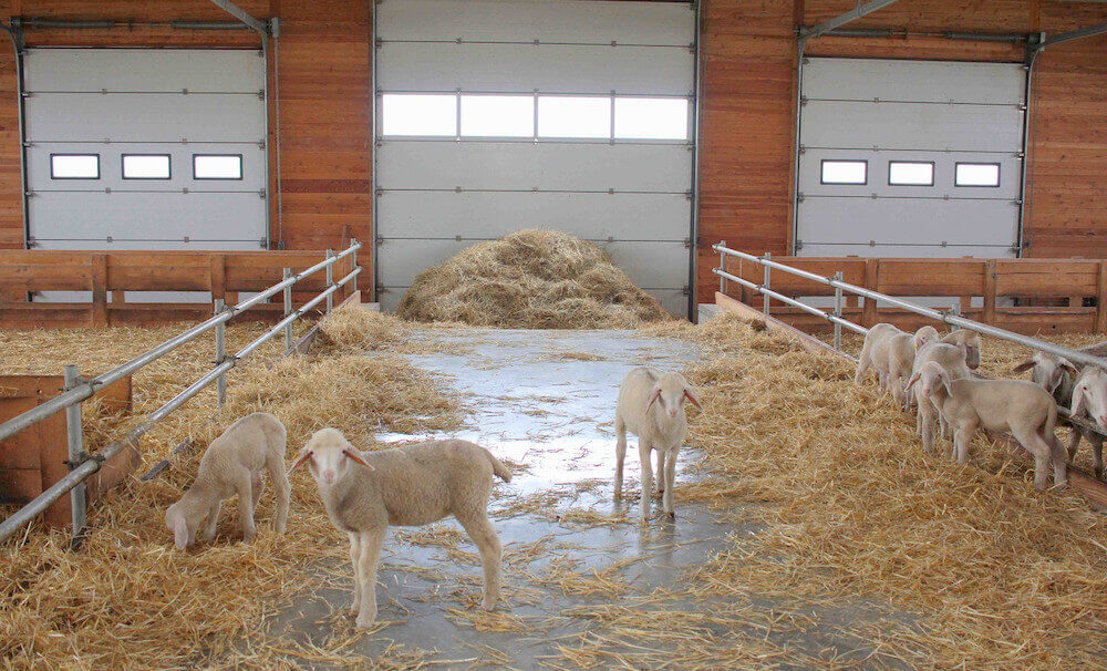 Определяемся с землёй и помещением под мини-ферму
